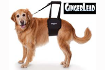 ginger_lead